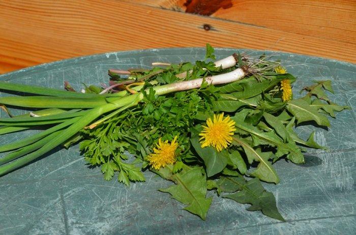 салат из одуванчиков фото