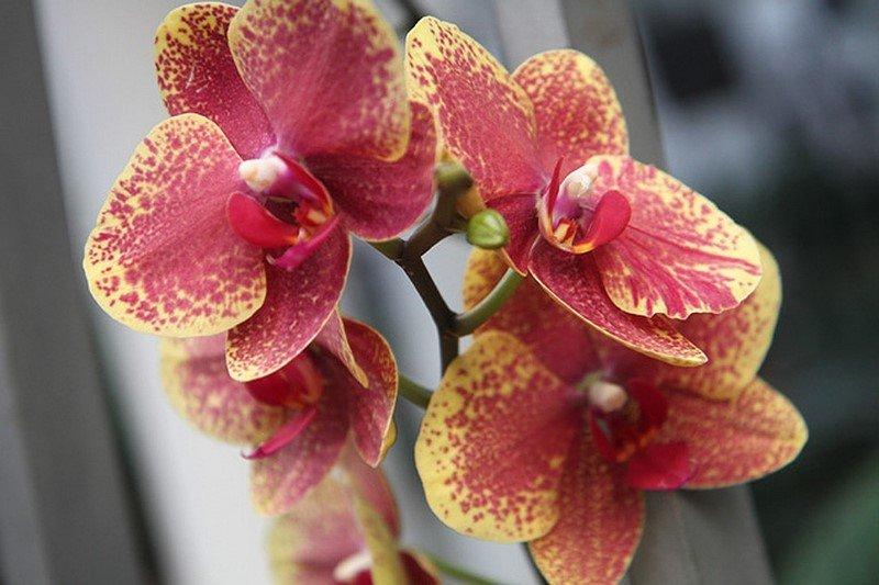 Банановая кожура для орхидей