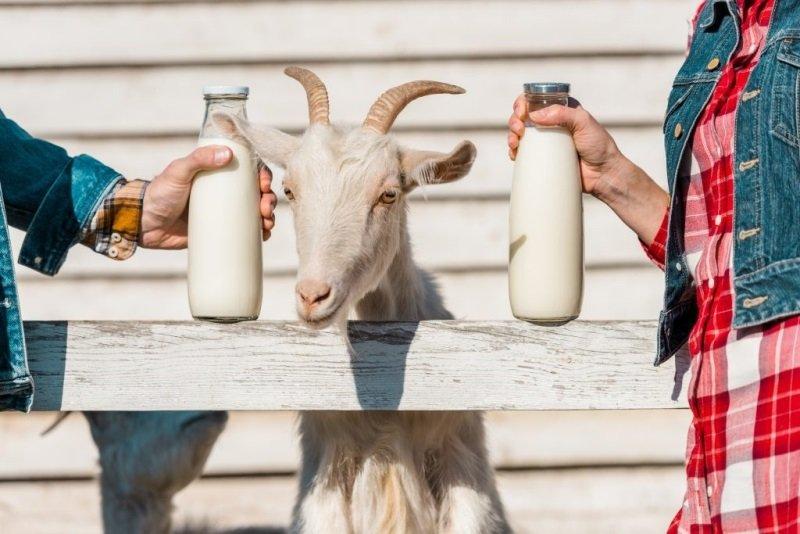 состав козьего и коровьего молока