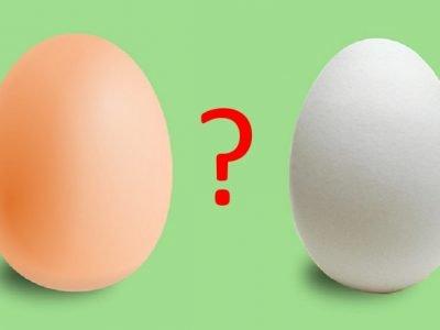 Чем отличаются яйца