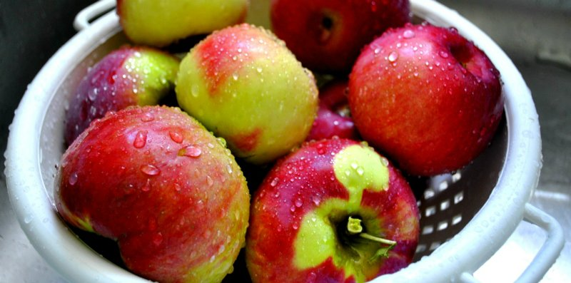 урожай яблок на даче
