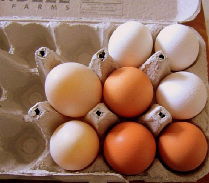 качество яиц