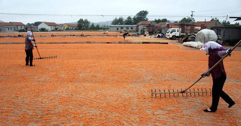 ферма креветки