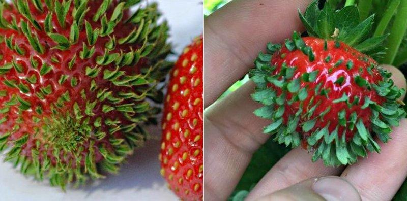 необычные фрукты и ягоды