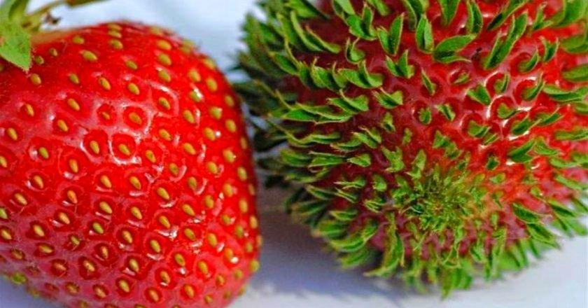 фрукты-рекордсмены