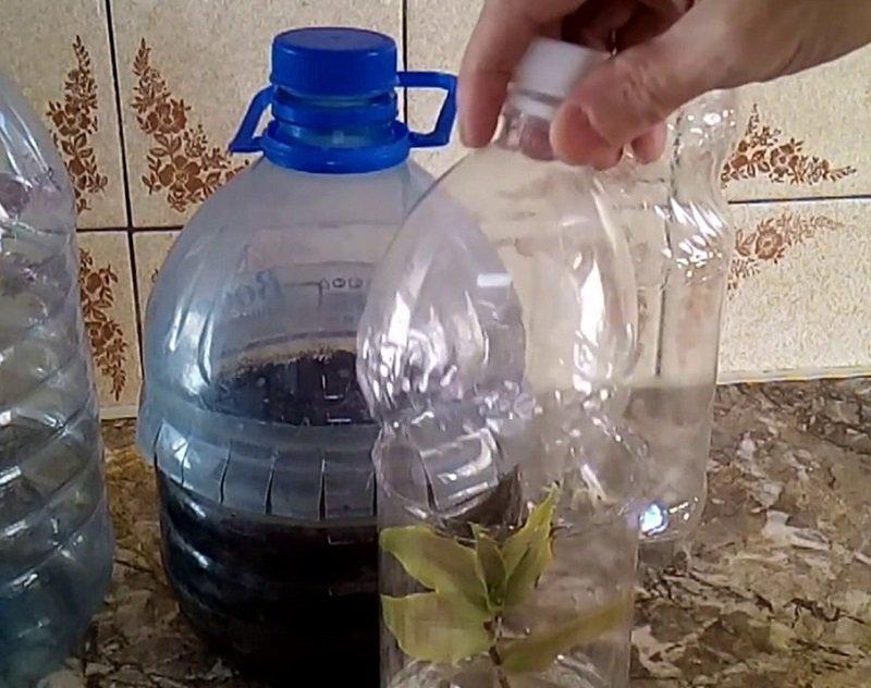 колпак для растений