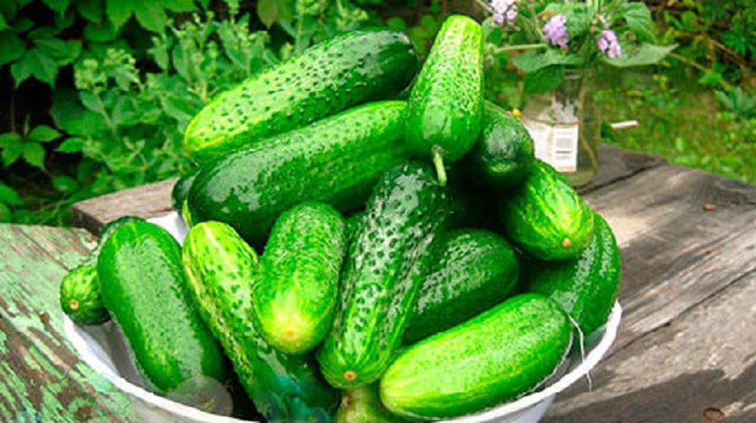 čerstvé uhorky v zime