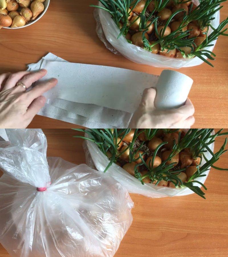 Ako pestovať pažítka