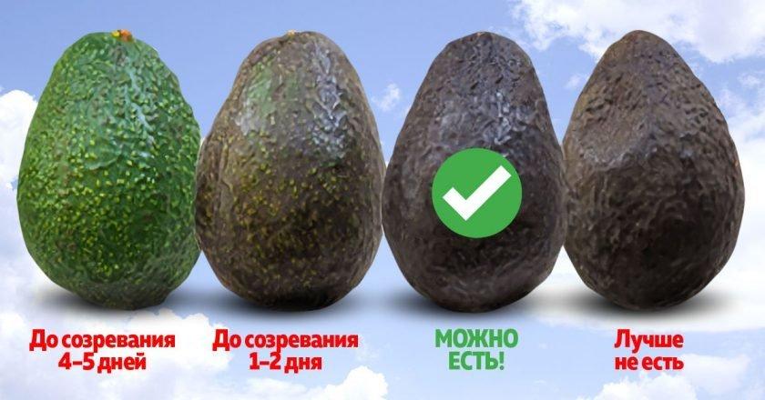 неспелое авокадо