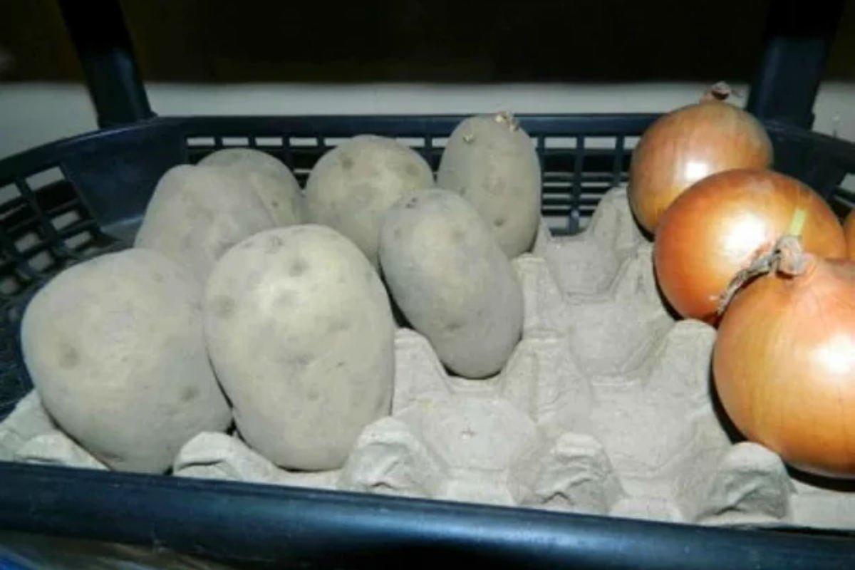 упаковка для яиц для хранения фруктов фото