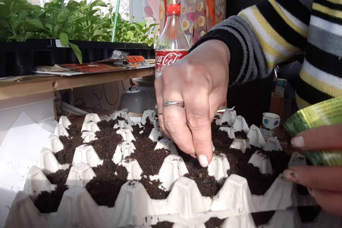 растения в яичной скорлупе фото