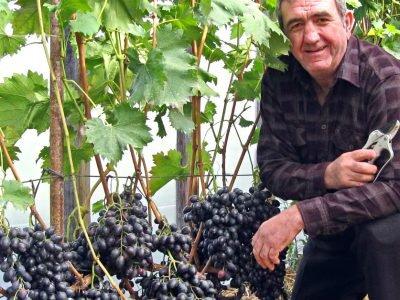 Как обрезать виноград летом