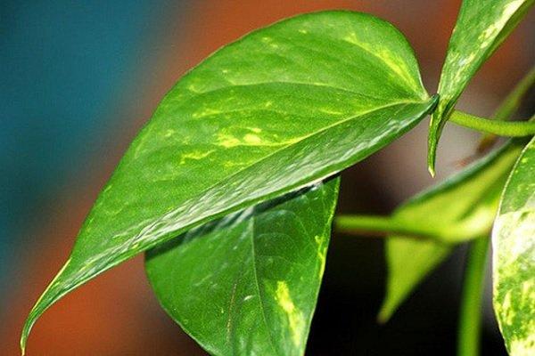 как оживить растения