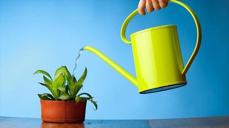 полив рослин