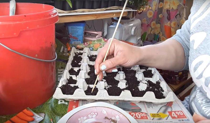 семена в яичных лотках