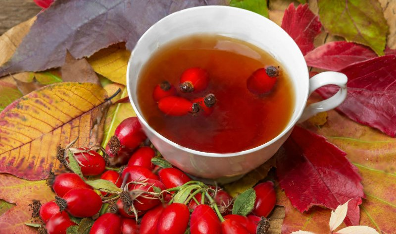 чай из шиповника для печени