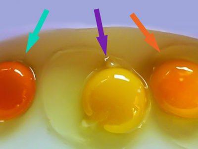 Как проверить яйца