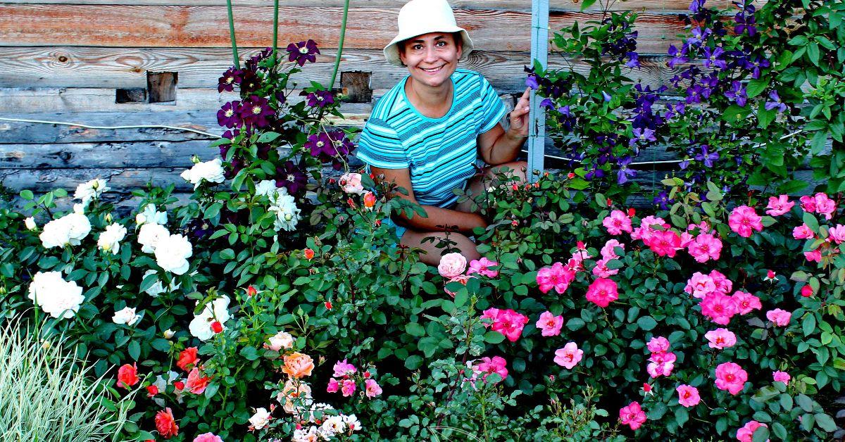 Как реанимировать розы после зимы