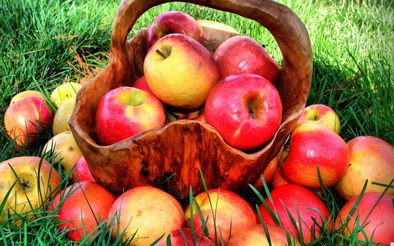 яблоки для памяти