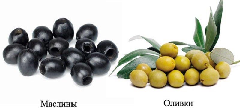 Jak wybrać oliwki i oliwki