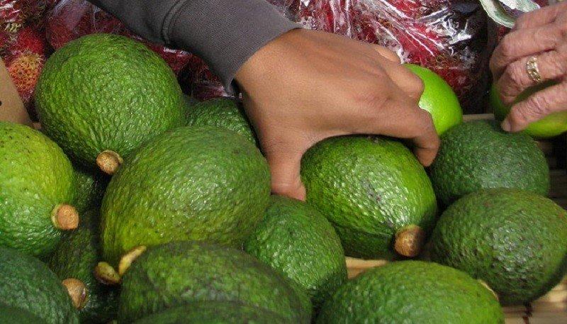 неспелый авокадо