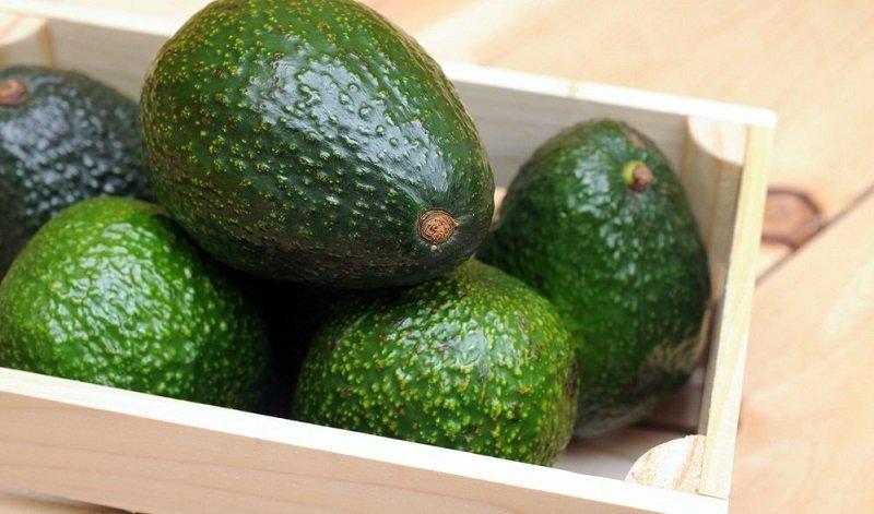 зеленый авокадо