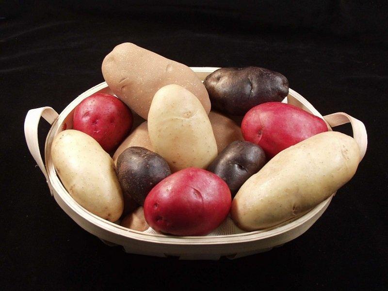 молодой картофель горчит