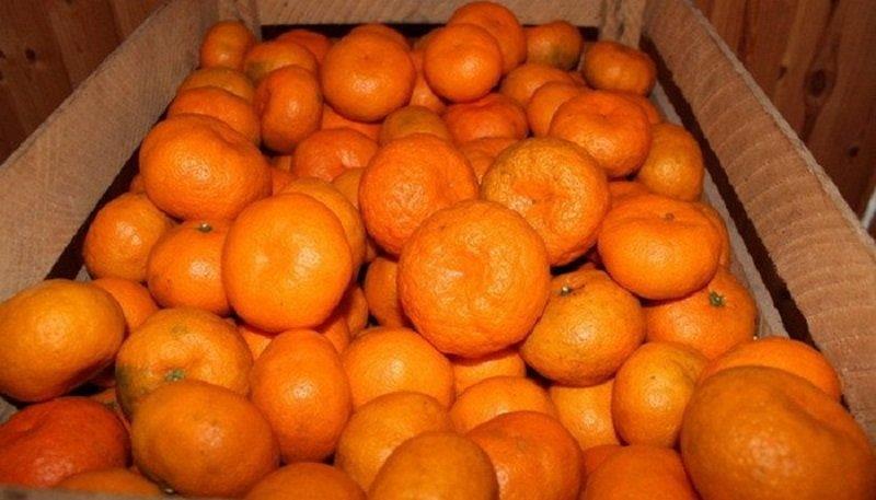 мандарины из абхазии снимок