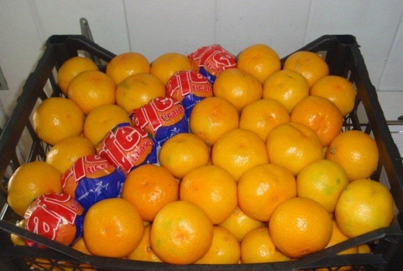 турецкие мандарины снимок