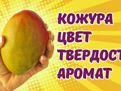 Как выбрать манго: признаки спелого фрукта