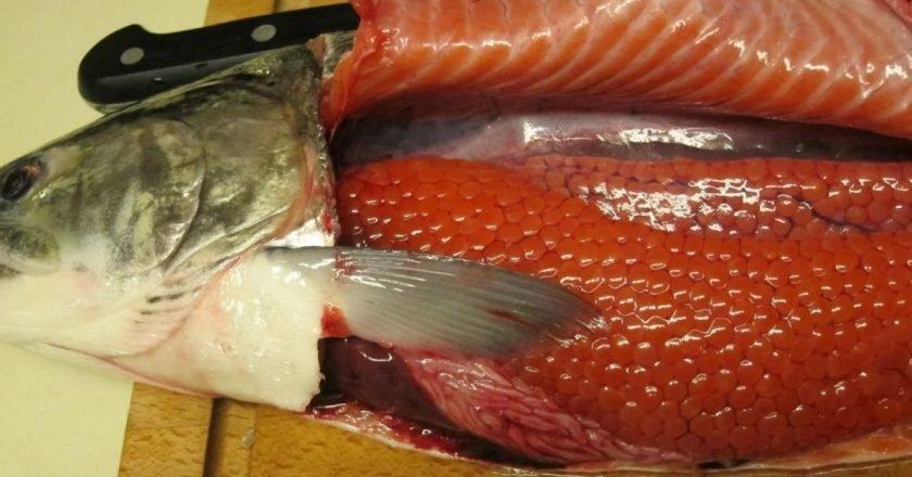 как выбрать рыбу с икрой