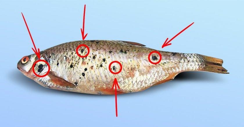 опасная рыба фото