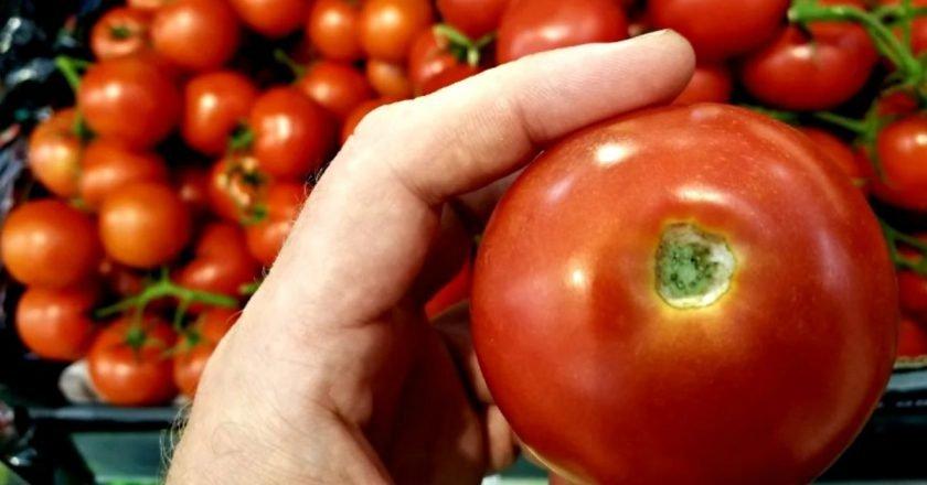 как выбрать томаты