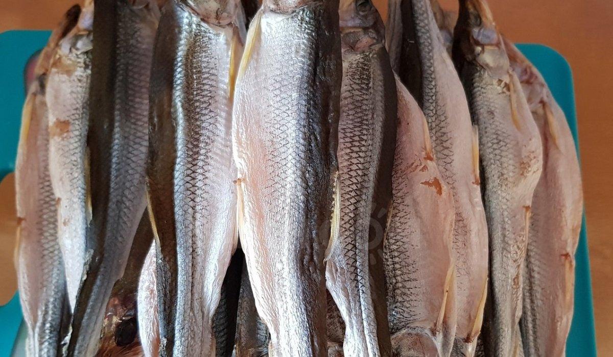 факты о рыбе