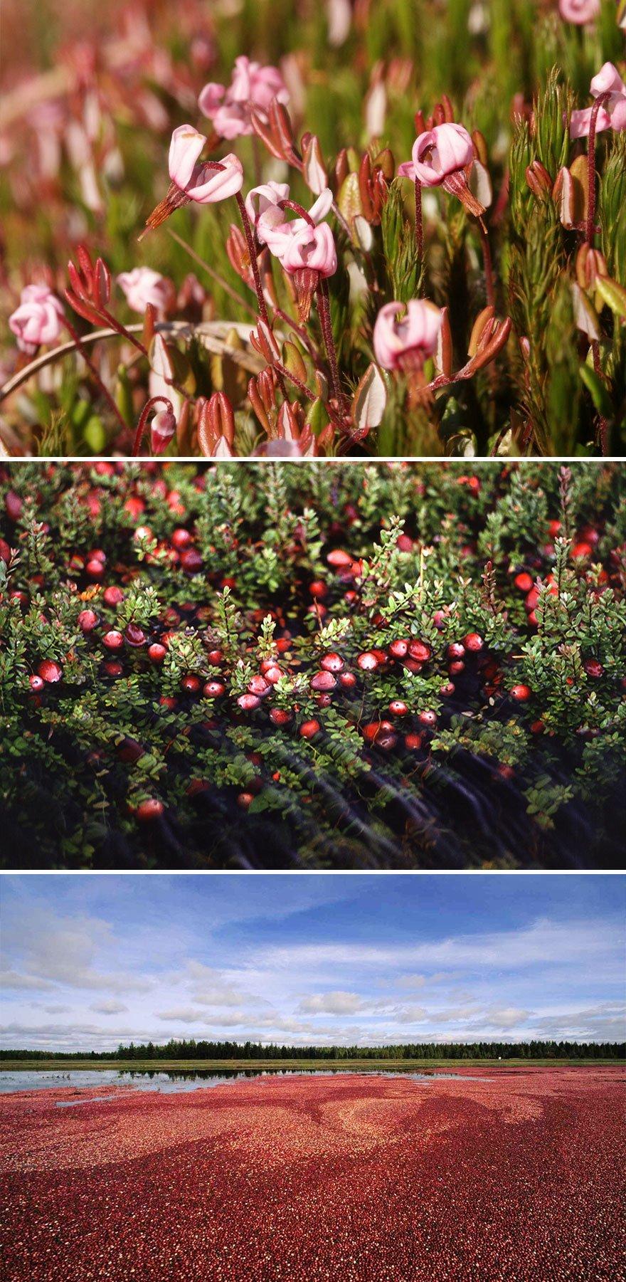 как выглядят продукты до сбора урожая