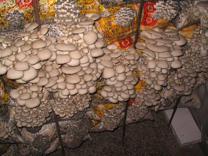 фото грибів в мішках