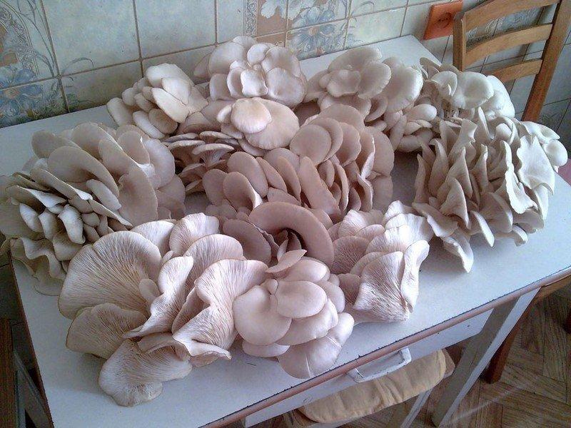 картинка гриби на столі