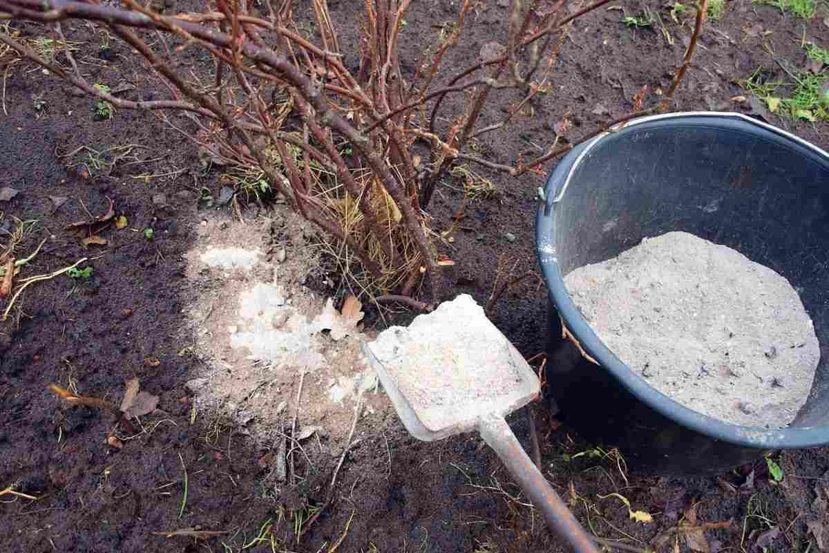 Как вырастить крупную смородину