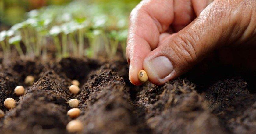 Когда собирать урожай