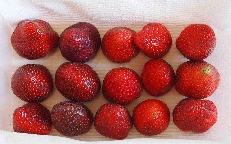 как замораживать ягоды на зиму