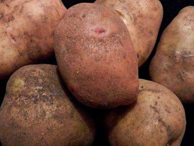 Как запечь картофель
