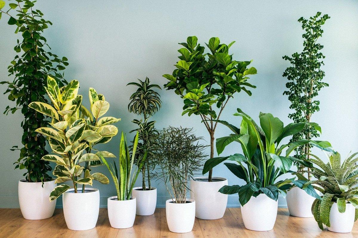 кімнатні рослини з запахом