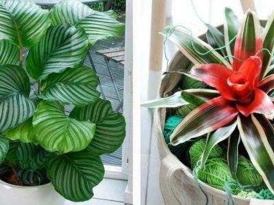 Какие растения любят тень