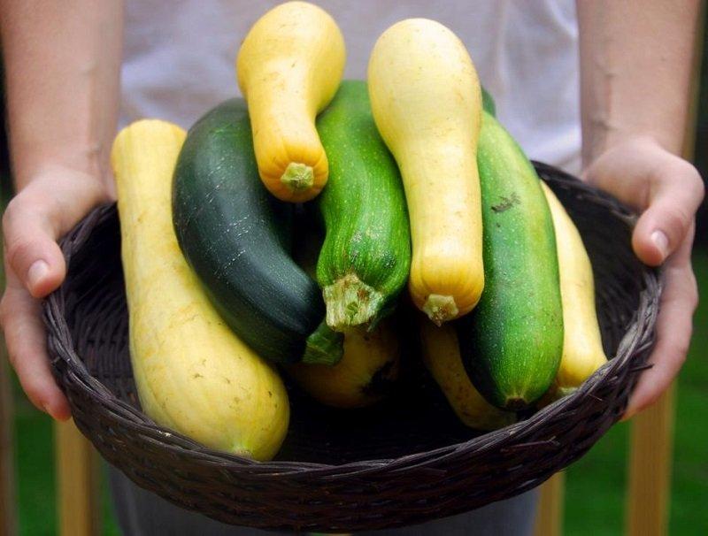 какой ты овощ