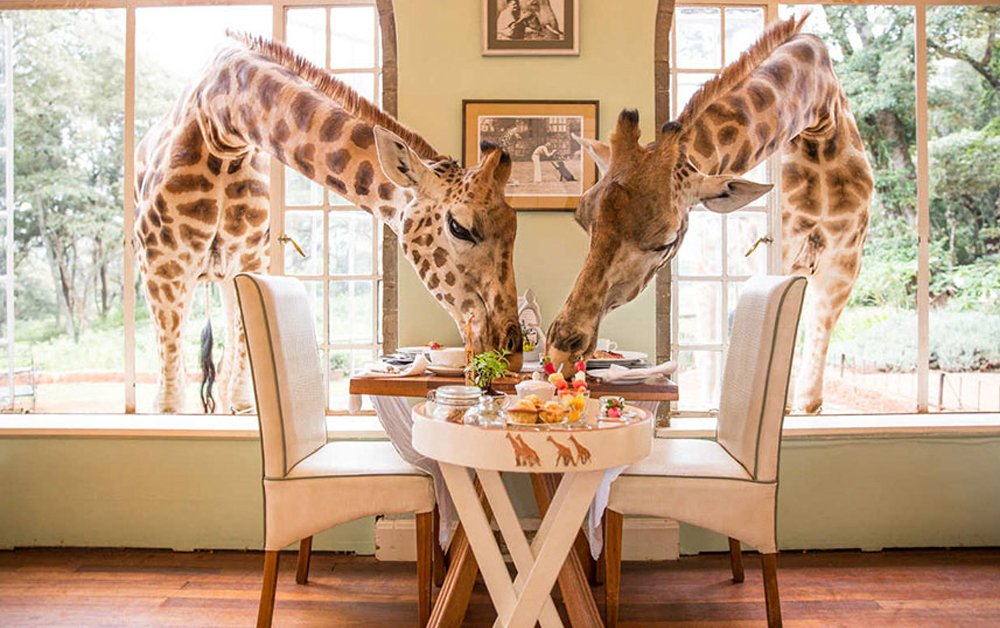 кафе с жирафами