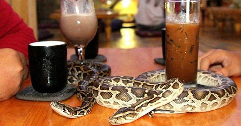 кафе с змеями