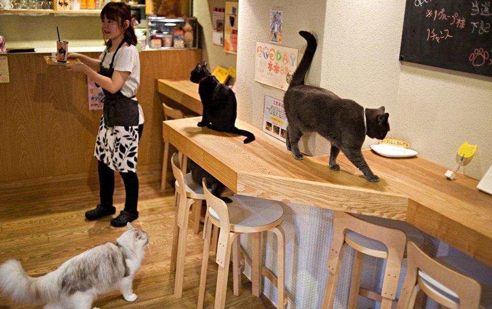 кафе с котами