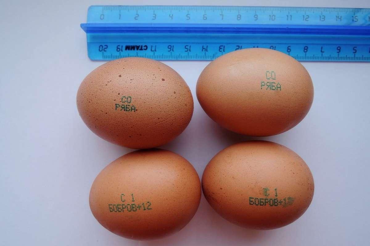 Крупные и мелкие яйца: какие покупать?