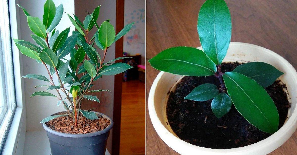 вырастить дерево на подоконнике