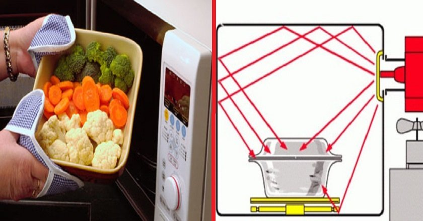 польза и вред от микроволновой печи